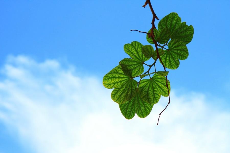 Leaves 15757 1280