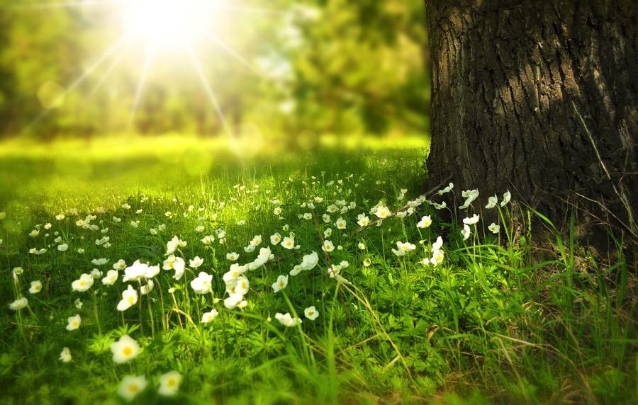 Spring 276014 1280